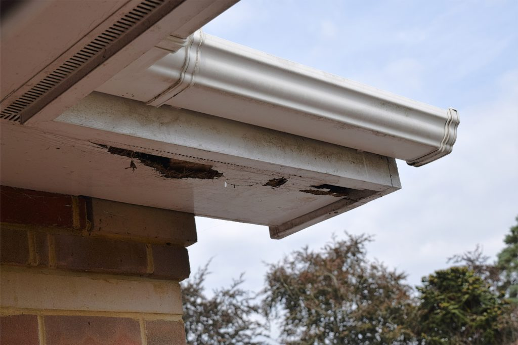 Fascia_soffits_other_good_places_to_check