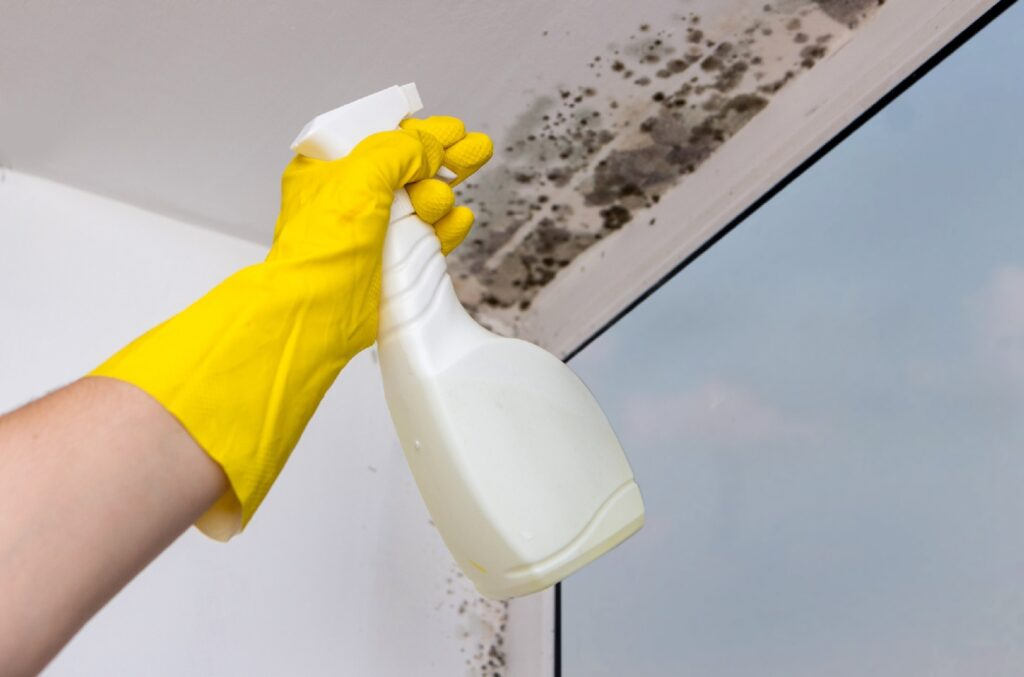 Anti-bacterial_Cleaner_Wiped_Down_Walls_Ceilings